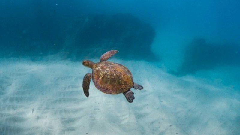 Snorkelling Noosa Sunshine Coast