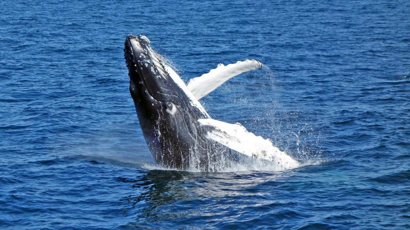 Whale Watching Noosa Sunshine Coast